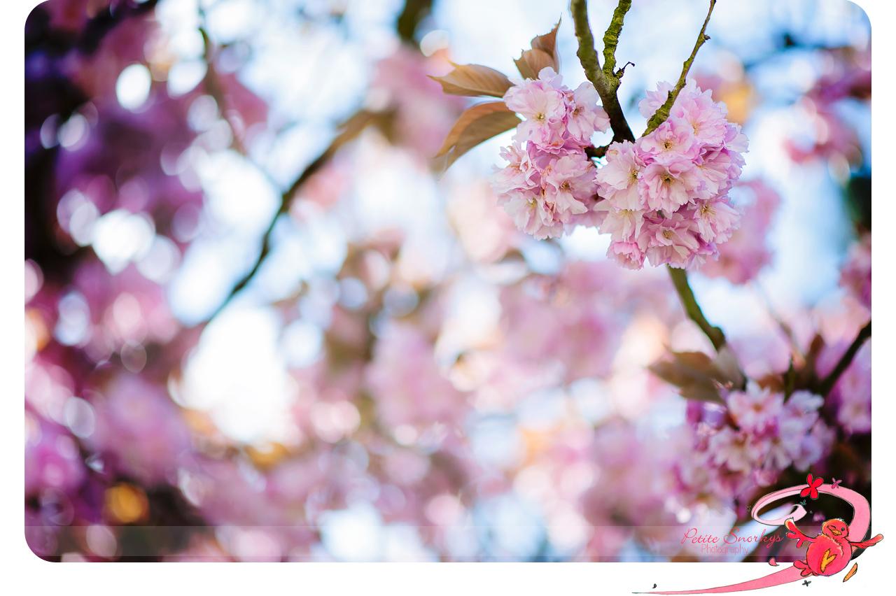 Rencontre sous le cerisier 2016
