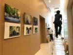 Japon / Belgique Projet photographique avec des athlètes paralympique